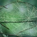 cobweb_nature